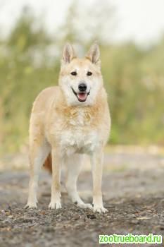 Приютская собачка Сима ищет новый дом