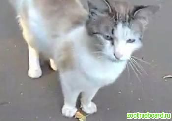 Пропал белый кот Орехово-Борисово!
