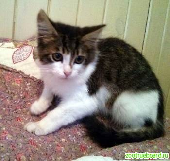 Пушистый котенок Макс в добрые руки