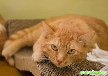 Рыжий котик Джон ищет родителей!  В добрые руки!