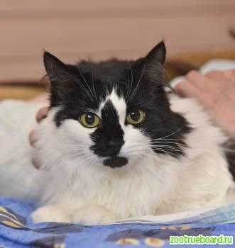 Шикарная кошка Коломбина ищет дом