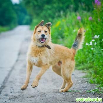 Шикарный пёс Тоби ищет дом
