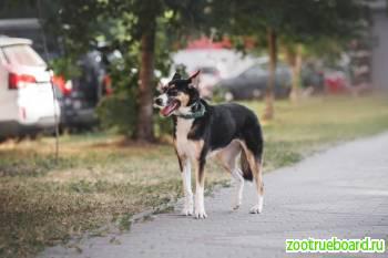 Собачка Нала в поисках дома