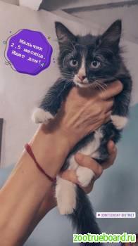 супер котята в добрые руки