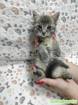 Трогательная Масенька в добрые руки!