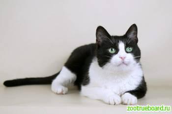 Умная красивая кошка Марта в добрые руки