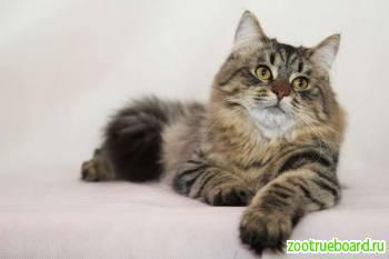 В дар кошка Мася - ваш дом счатьем украсит