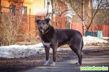 Великолепный пес Амур ищет дом! !