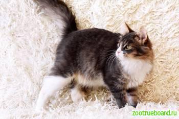 Замечательный пушистый кот Кузя ищет дом