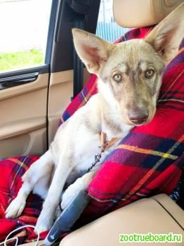 Замечательный  щенок Джанго в добрые руки!