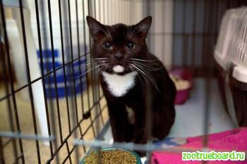 Настоящий кот-барон Мюнгхаузен ждёт чудесных перемен