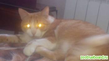 помогите выжить коту звать БОНЯ.