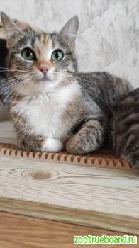 Добрая и самая ласковая кошечка Муся ищет дом (2 года)