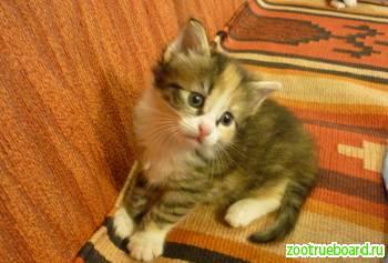 Крошечные котята в дар!
