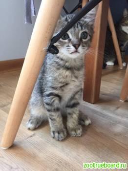 Отдам котенка в добрые руки Спб