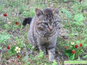 Тимоша добрый кот подросток