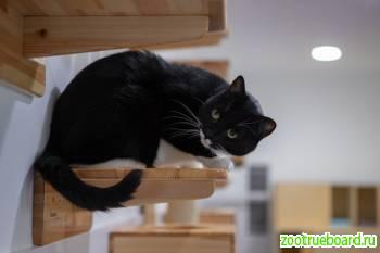 Шикарнейший плюшевый кот Джимми ищет дом.