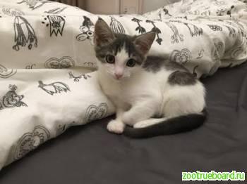 У каждого котенка должен быть хозяин и дом!