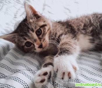 В хорошие ручки котёнок-девочка! ! !